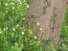 efeu-und-wildblumen
