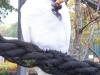 kakadu-frisst-erdnuss