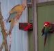 verschiedene-papageien